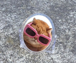 cat, pink, and funny image