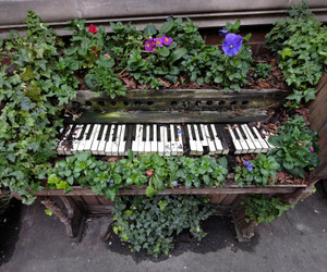 flowers, piano, and tumblr image