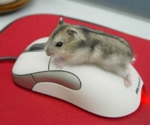 funny, mouse, and hamster image