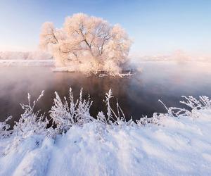 beautiful, belarus, and tree image