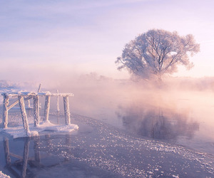 beautiful, tree, and winter image