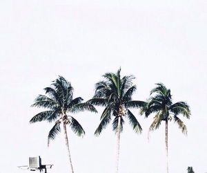 nature, summer, and palm trees image