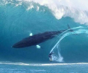 ocean, scary, and surfing image