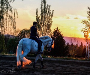 horse, dressage, and sunset image