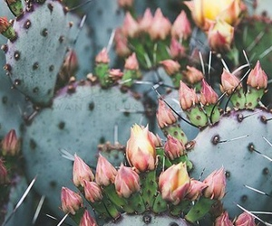 flowers, cactus, and plants image
