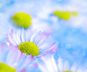 colors, flowers, and daisies image