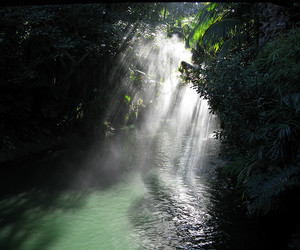 nature, water, and tropical image
