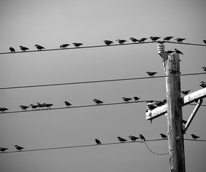 telephone pole, wires, and birds image