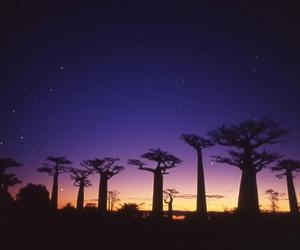 baobab, Island, and madagascar image