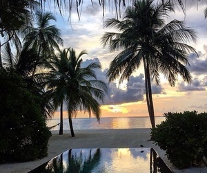 beach, heaven, and palm trees image