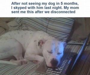 dog, funny, and skype image