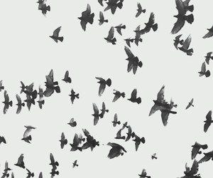 black and white, pajaros, and wallpaper image