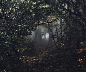 nature and dark image
