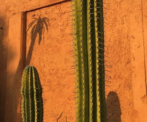 cactus, colorful, and hipster image