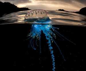 jellyfish, boredpanda, and მედუზა image