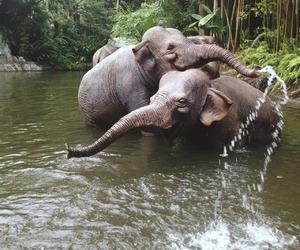animals, elephant, and bush image