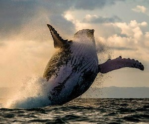 whale image
