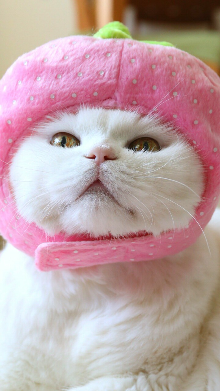 Animals Baby Baby Cat Background Beautiful Beauty Cat Cute Animals Cute Baby Cute Kitty Dots Iphone Kawaii Kitten Kitty Nature Photography Picture Pink Still Life Strawberry Wallpapers We Heart It Beautiful Cat