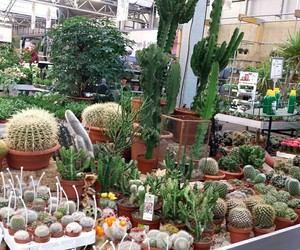 cactus, inspiration, and plants image