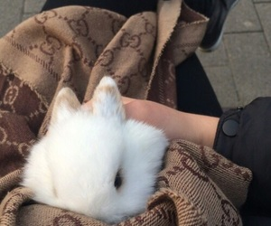 bunny, gucci, and cute image