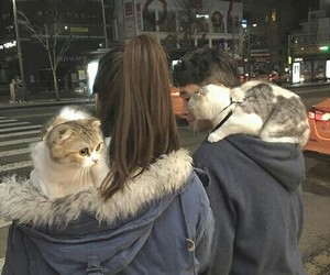 cat, couple, and boy image
