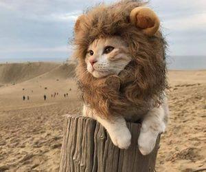 cat nice lyon image