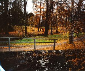 autumn, film, and boulognerskogen image
