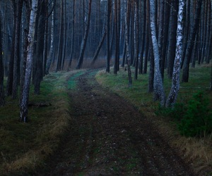 forest, spooky, and tree image