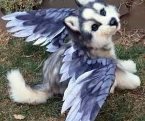 dog, wings, and animal image