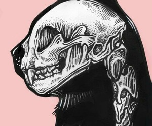 cat, skeleton, and black image