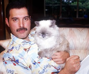 Freddie Mercury, Queen, and cat image