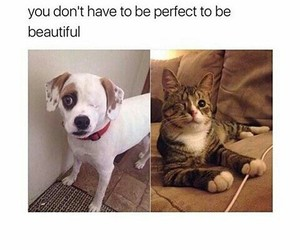 beautiful, animal, and cat image