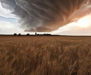 cloud, field, and nature image