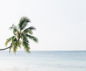 minimalism, nature, and white image