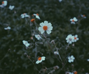 background, cold, and daisy image