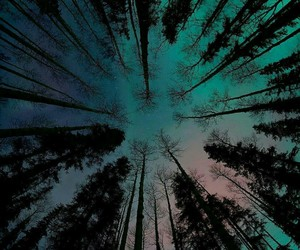 sky, tree, and forest image