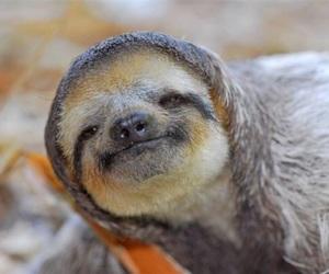 animal, beautiful, and cool image