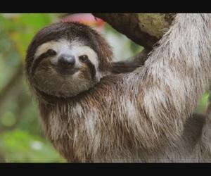 animal, beautiful, and Lazy image