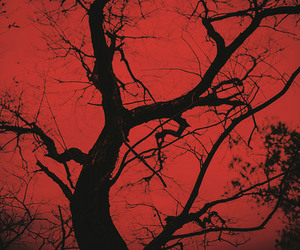 red, tree, and black image