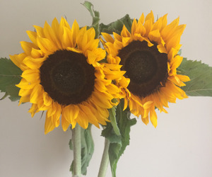 bee, flowers, and sunflowers image