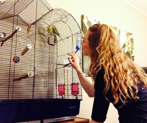 birds, budgies, and curly hair image