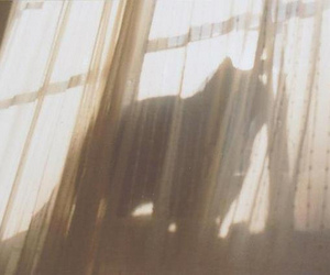 cat, curtain, and mai image