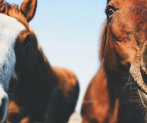 horse, nature, and friends image