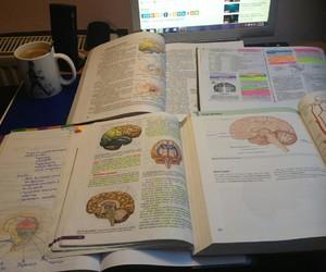 biology, medicine, and doctor image