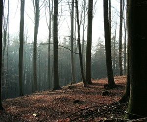 forest, germany, and landscape image