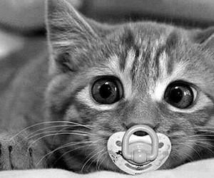 gato blanco negro tumblr image