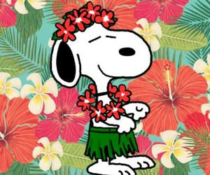 beagle, dog, and hawaii image