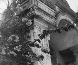 flowers, architecture, and building image