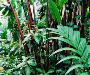 bambus, green, and hawaii image