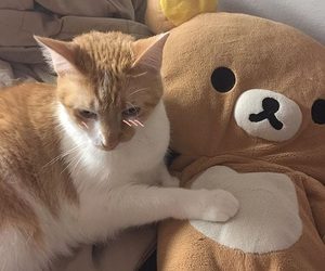 cats, korean, and rilakkuma image